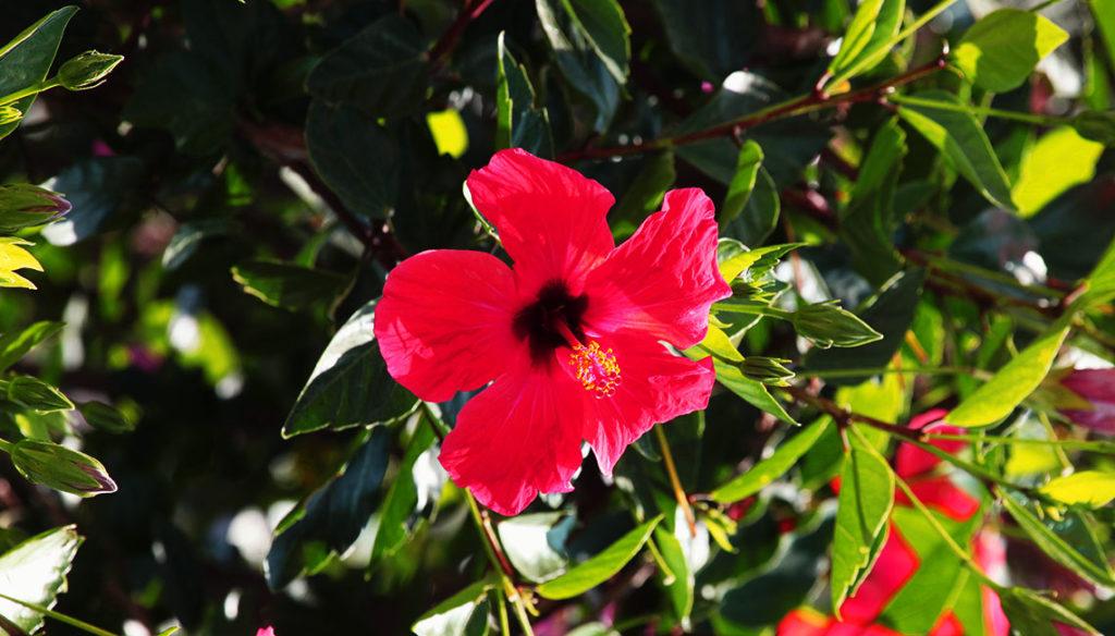 Τα λουλούδια του κήπου μας
